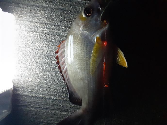 これ、なんて言う魚ですか?