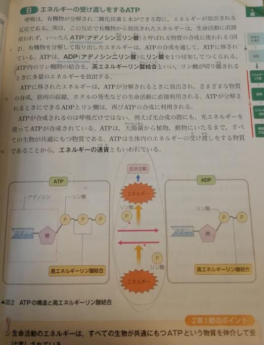 生物基礎 ATPについて教えて下さい。 写真は教科書です。 学校では 下の図に ATP →→→→→ ADP +H2O 「可逆反応」 +P+エネルギー とありました。 ADPにリン酸とエネルギーを与えると 結合して、ATP に戻る?? だとわかったのですが、ATPの方の+H2Oとはどういう意味かわかりません。 たまたま、H2Oなだけで、無機物だったらなんでもよいのかとか、考えて全く進まず困っています。 また、同化と異化の図など、見て余計ごちゃごちゃになってしまいます。 どなたか、分かりやすく教えて下さい