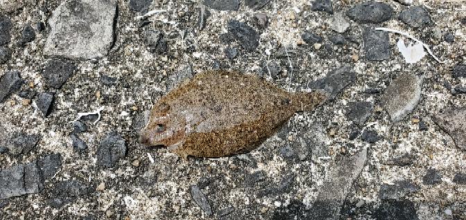 この魚は何という魚ですか?わかる方おられますか?