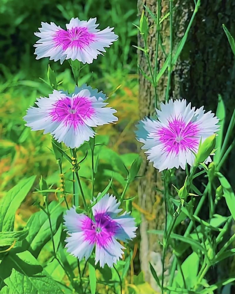 花の名前を教えて下さい!