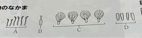 Cは多くの花において、一般に色鮮やかで目立ちやすい。その理由を植物が受粉する仕組みを考えて説明しなさい これが分かりません