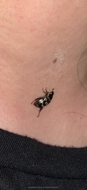 この虫の名前を教えてください! 2センチくらいの虫です。
