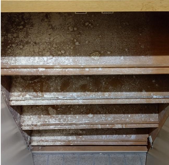 玄関の下駄箱に白いカビのようなモノが生えて困っています。 これはどういった風に処置すればよろしいでしょうか?