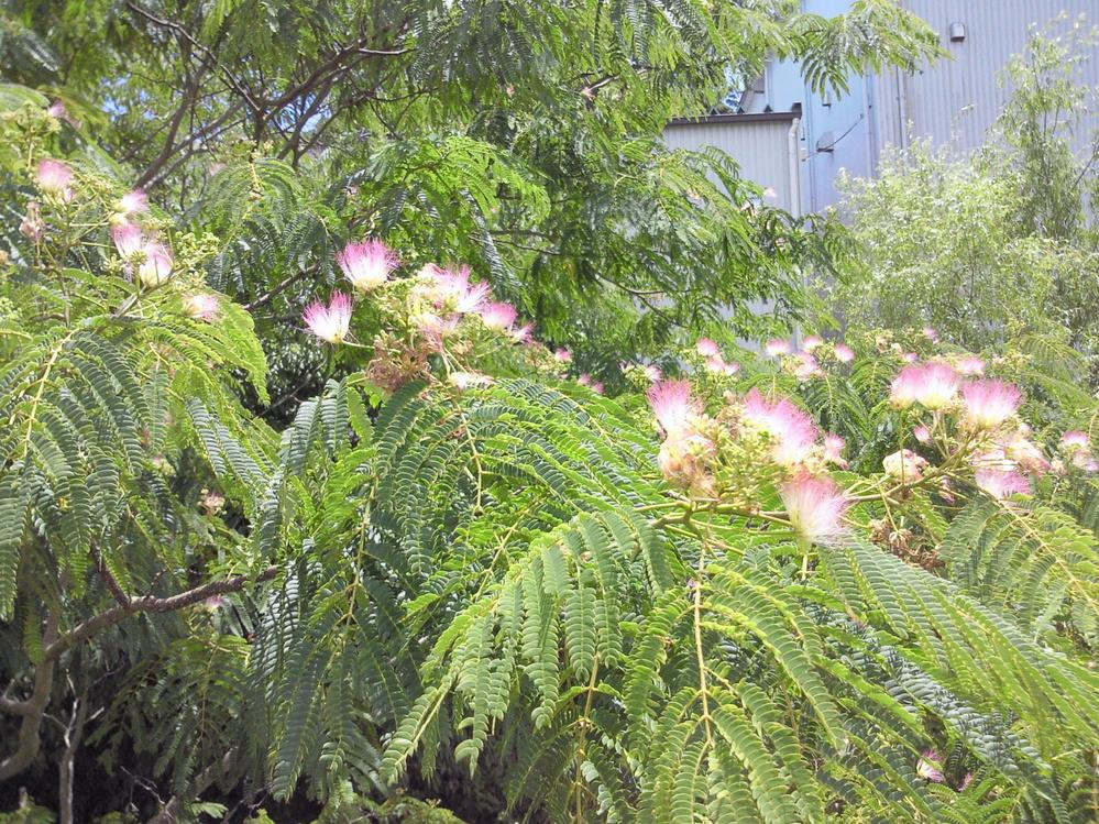 この木花は何という名前ですか?