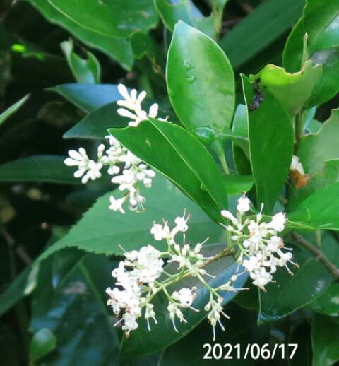 花の名前を教えてください、岐阜県美濃加茂市杁ヶ洞で、 撮影20210617
