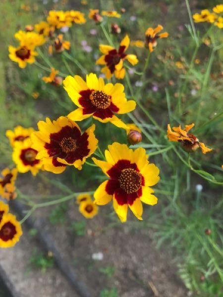 この花の名前を教えていただけますか?