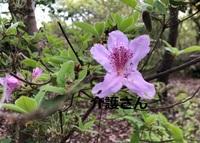 この花の名前は何ですか? 撮影日は2021年4月14日で撮影場所は兵庫県です。 よろしくお願いします。