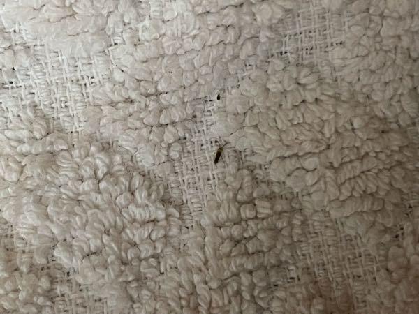 この虫なんですか 部屋に最近よく出るんですが、、 めちゃめちゃ小さいです。 ありより小さい
