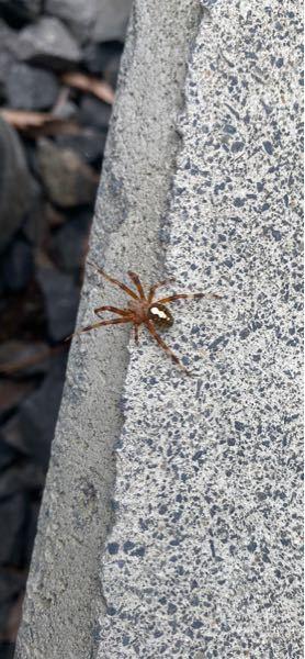 この蜘蛛の名前は何ですか?