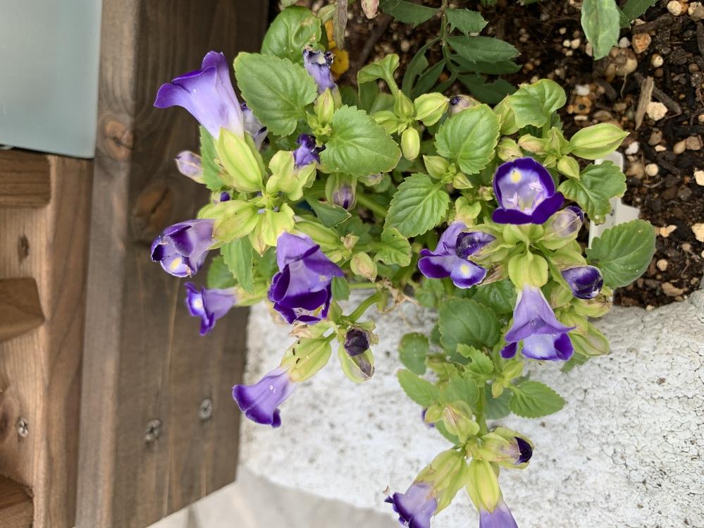 これはなんのお花か分かりますか? 教えてください。