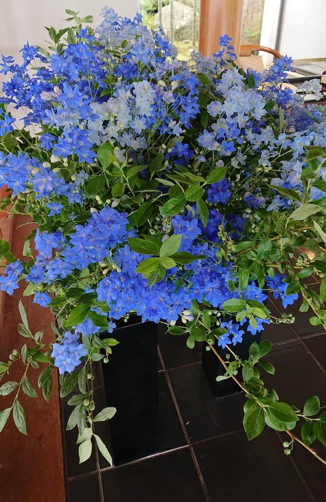 これはなんという名前の花ですか?