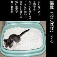 法律上「拾得物横領」と呼ぶ行為を「猫糞(ねこばば)」と言うのは間違いですか?