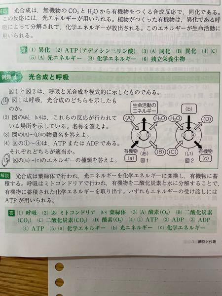 ミトコンドリアでの呼吸では、解凍系・クエン酸回路・電子伝達系の3つで最大38ATPが合成されますが、写真の(4)みたいにATPの分解も同時に起こるのですか?