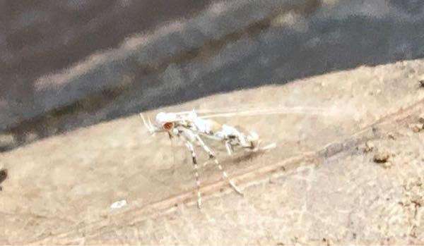 なんの虫か気になりすぎて夜しか眠れません 変わった蛾?のような虫が枯葉にとまっていました 少しの情報でもわかる方いましたら回答よろしくお願いします…!