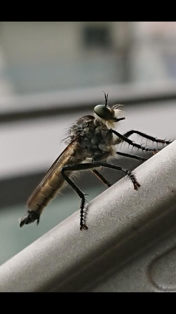 この虫なんですか?