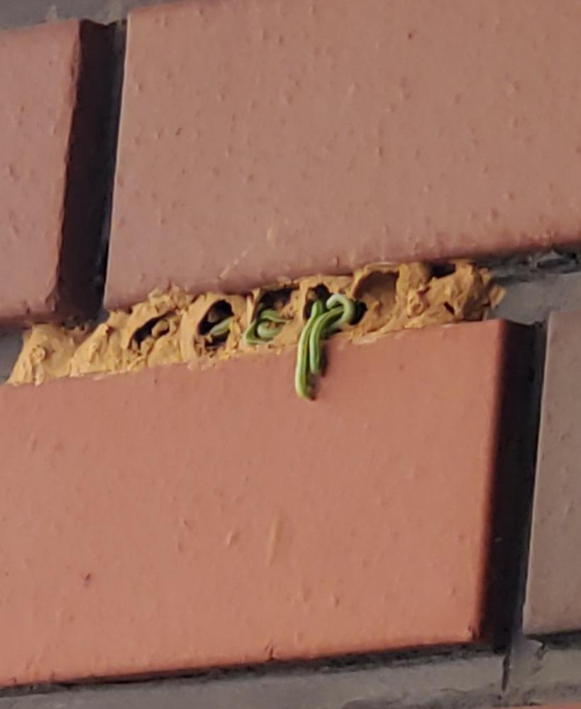 これはなんて言う虫ですか? 巣をわったら出てきました。動いています。