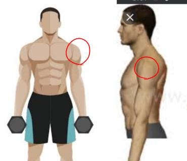 腕の付け根の部分はなんといいますか? 画像の赤丸の部分です。 左が正面からみたとき、右が横から見た部分の、カーブしてる部分です。