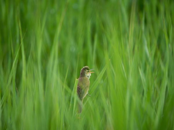 写真の野鳥の名前を教えてください。