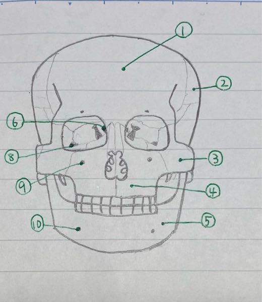 写真の⑥の名称を教えてください。 下手くそですみません。 あと医学書院の解剖生理学の教科書を使っているんですが、その教科書だけだと授業についていけません。 おすすめの教科書、本、参考書などがあれば教えてください。 お願いします。 解剖生理学 看護学生