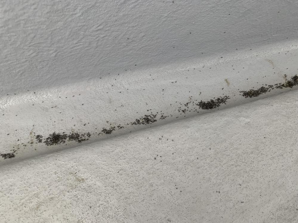 困っています!! 今日1週間ぶりにバルコニーに出たら 小さな虫が大量発生しておりました!!! もお固まりの虫のコケみたいになっているのです! 去年の7月に今のお家を買って シロアリ対策はやったのですが こんな事ははじめてでびっくりと困っております、、 シロアリではなく、コバエ?かなって思っているのですが、対策と原因が分からなくて 教えていただきたくて質問させていただきました。 写真も乗せておきます。