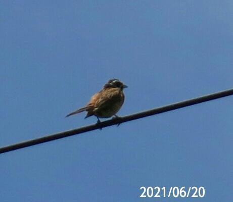 小鳥の名前を教えてください、 岐阜県米田白山で、 撮影20210620