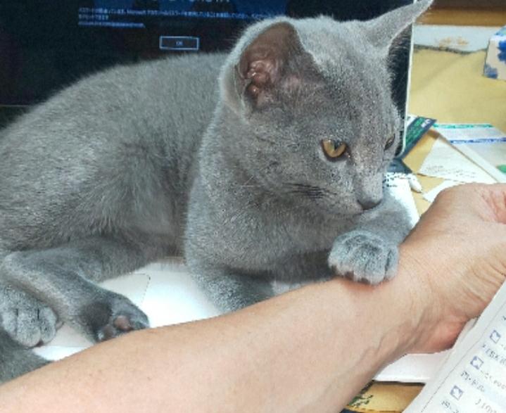 あなたの家の猫ちゃん! 世の中の情報は、 新聞派?それともネット派? 写真はいつも軟禁されてるヤツの息子@父宅です。