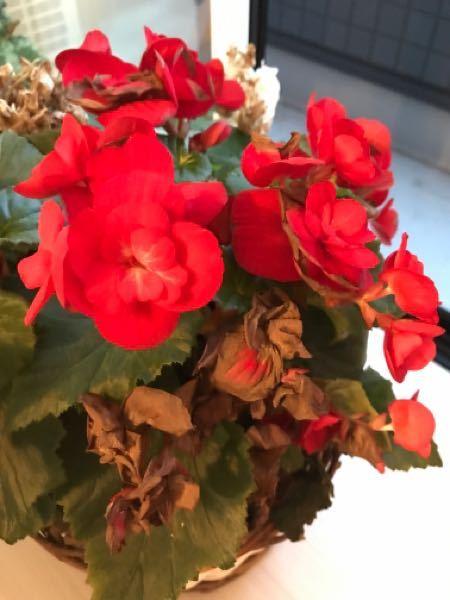 この花の名前を教えてください。 よろしくお願いします。