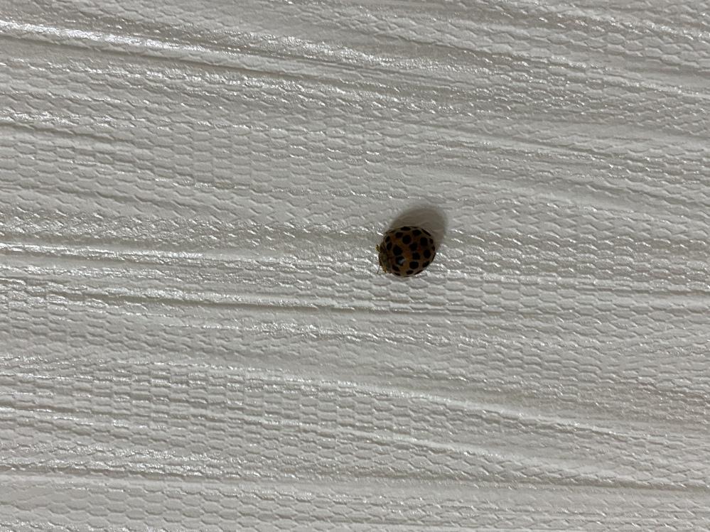 これはなんて言う虫ですか