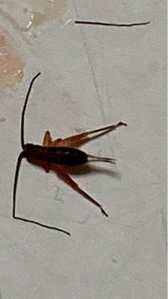 この虫はなんですか?