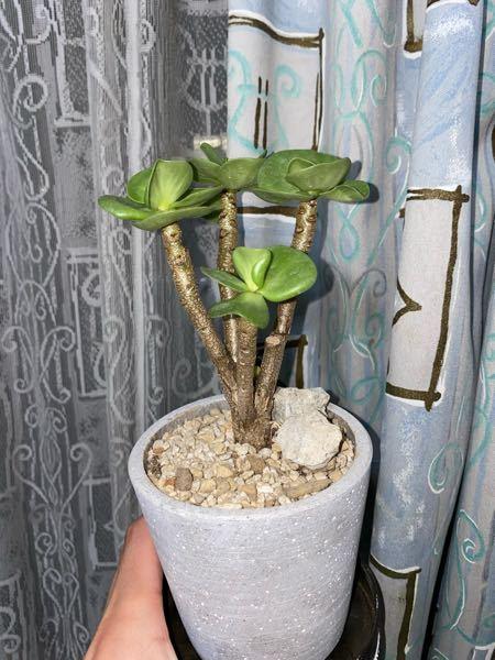 この植物の名前を教えてください。よろしくお願いします。