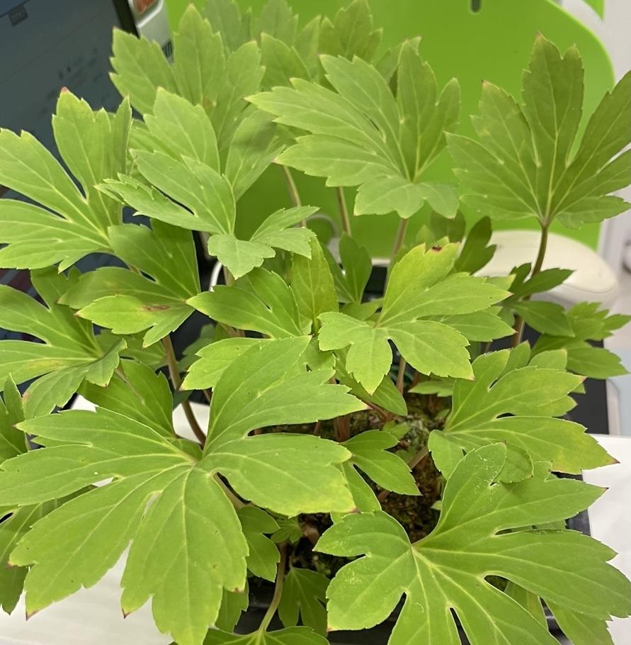 【盆栽の名前】こちらの盆栽の種類及び名前がわからず、どなたか教えていただけますでしょうか?