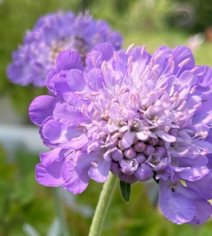 この花の名前を教えてください。 m(_ _)m