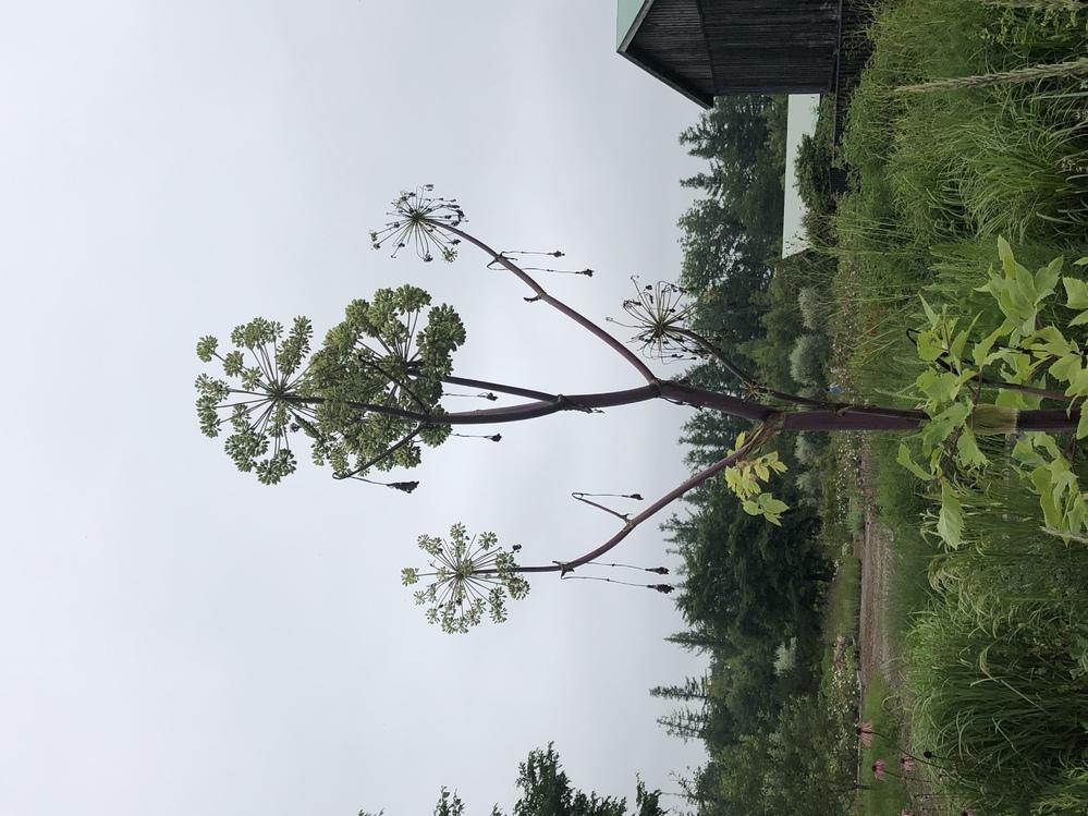 この植物はなんという名前の植物ですか? 撮影地は北海道帯広市です。
