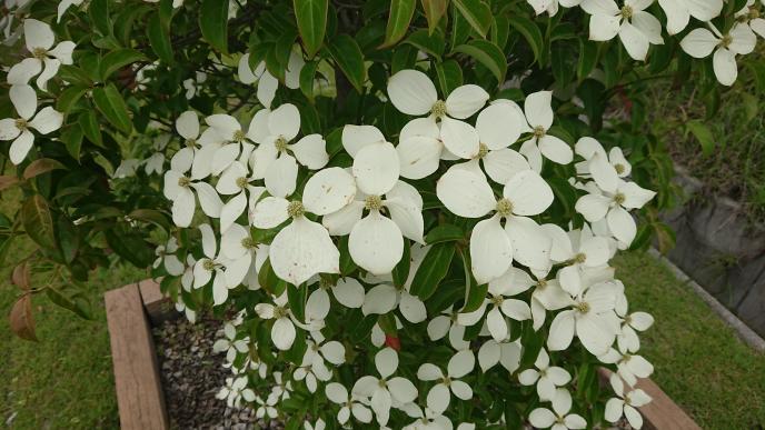 この花(木)の名前分かる方いらっしゃいますでしょうか?