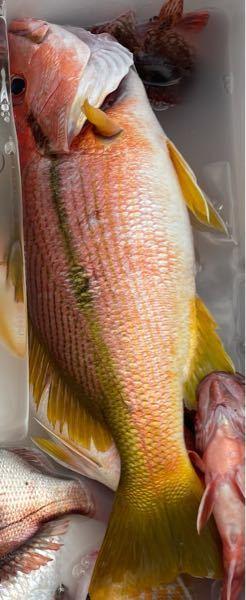 教えてください このお魚のお名前は何ですか?