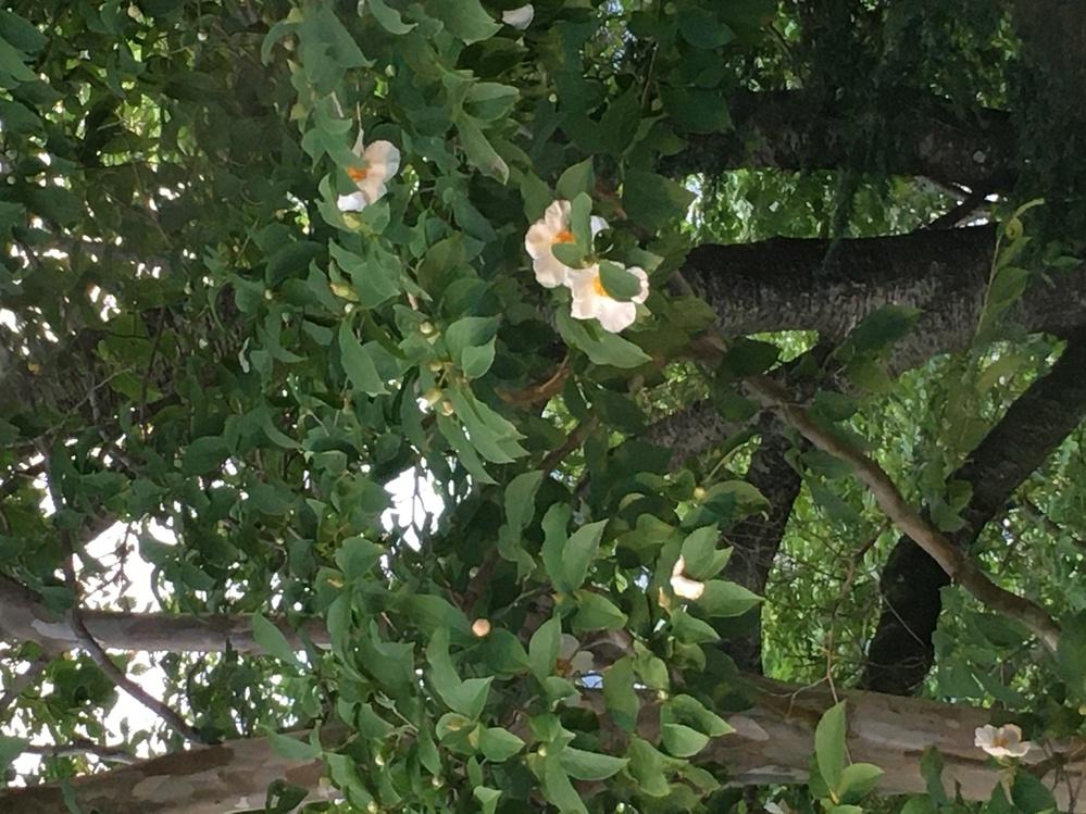 画像の木の名前を教えていただけませんか。場所は茨城県笠間市にありました。