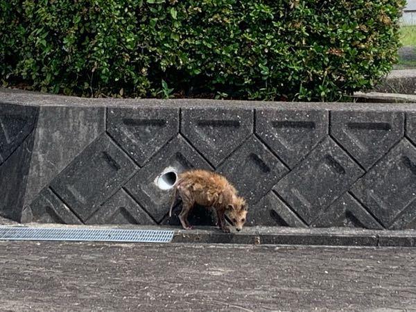 この動物は、何ですか?