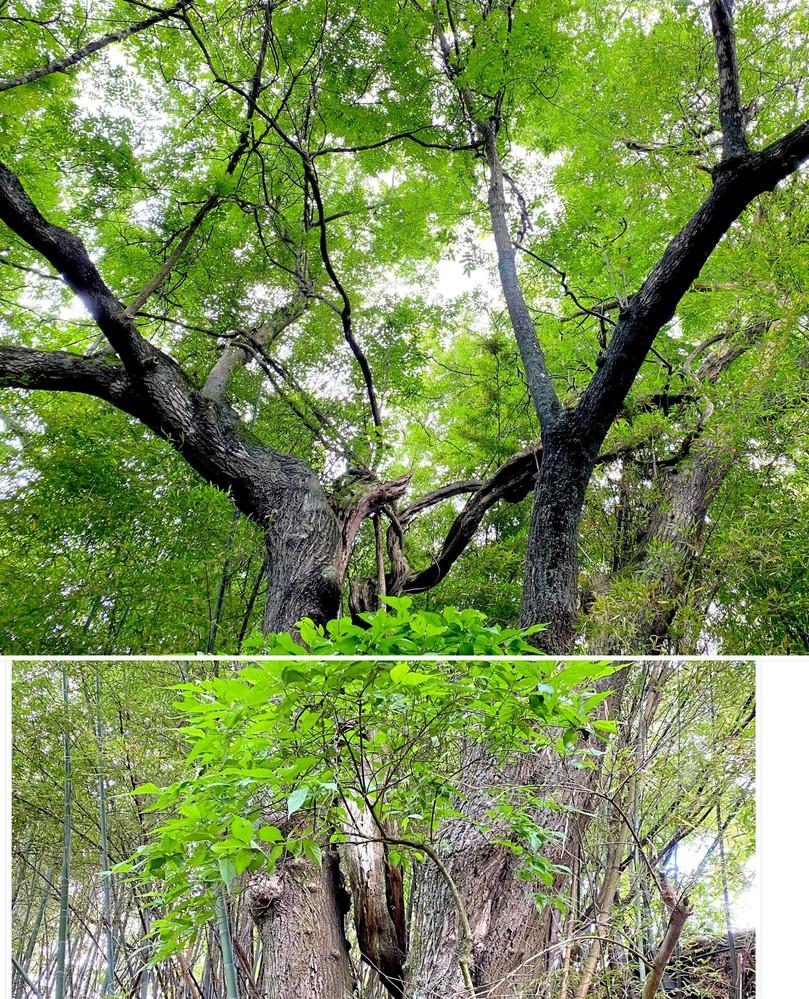 樹木の名前を教えてください。
