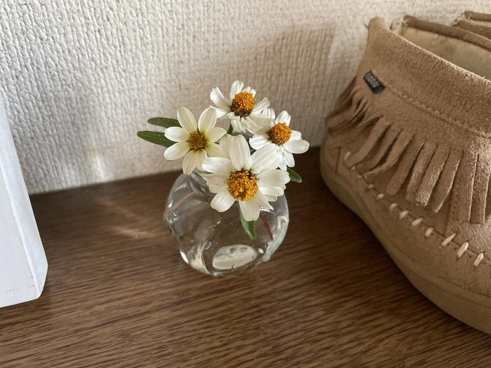 この花の名前わかりますか??