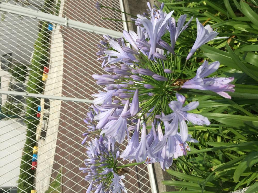 この花の名前は何ですか?