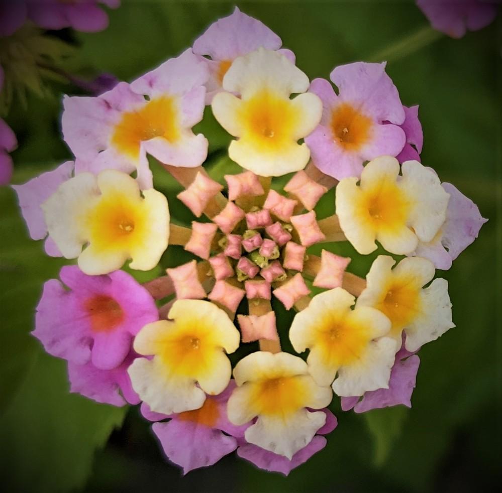 この花の名前教えて下さい1