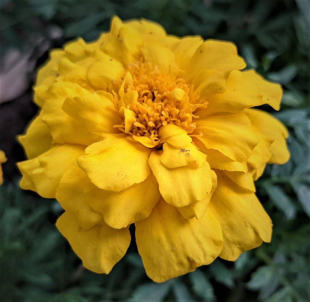この花の名前教えて下さい3