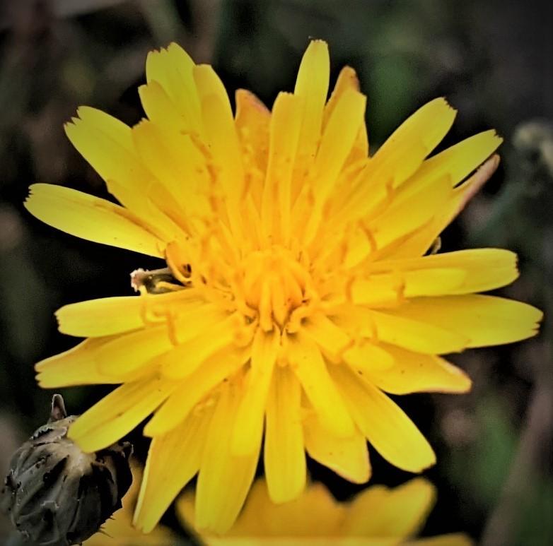この花の名前教えて下さい40