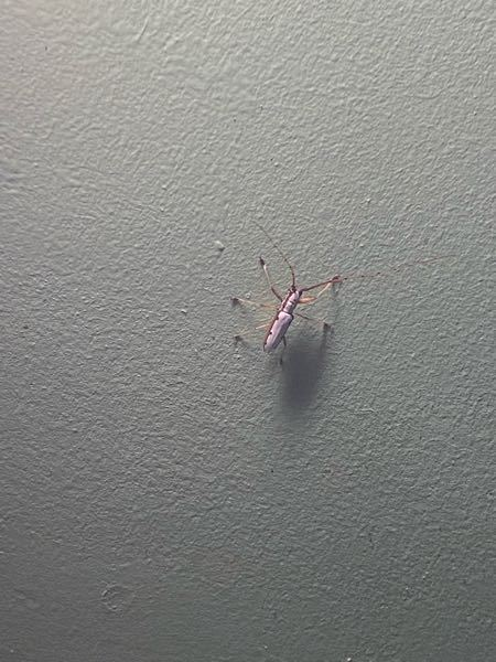 これなんていう虫ですか?