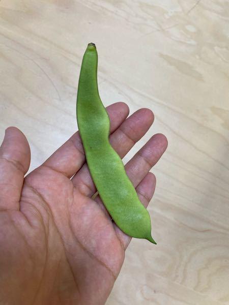至急!! この野菜の名前はなんでしょう?