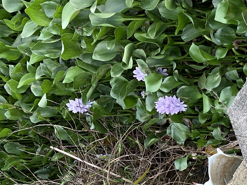 これは一体なんの花でしょうか? ご存知の方教えてください。