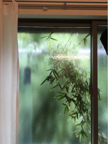 隣人の植物が窓に張り付いています。 どう対処すればいいですか? 直接文句言いに行った方がいいですかね? さすがに洗濯物干せないし迷惑です。
