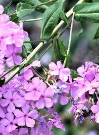 この花の名前をご存じの方、教えて下さい。
