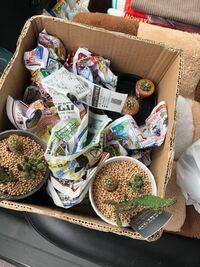 最近多肉植物のサボテンを買いました。 月に2回で多めに水をあげたらいいでしょうか また気おつけることなどはありますか? 詳しい方お願いします ♂️