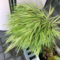 これは何という植物ですか? (斜め下のプランターはベゴニアです)